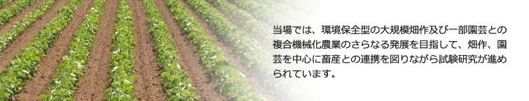 十勝農業試験場